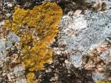 haystack_lichen3