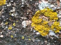 haystack_lichens